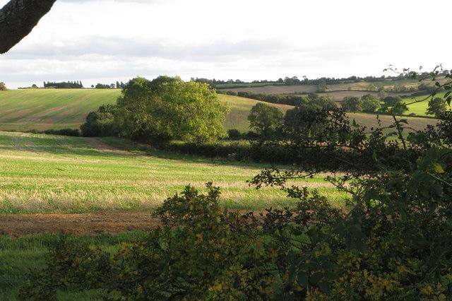 Fields by Knightley Way