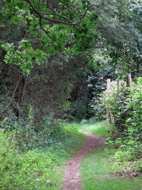 Footpath north of Cooks Wood (2)