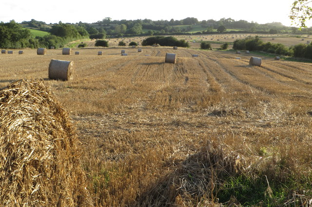 Harvested fields and straw reels