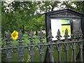 SJ9593 : Sunflower at Hyde Chapel by Gerald England