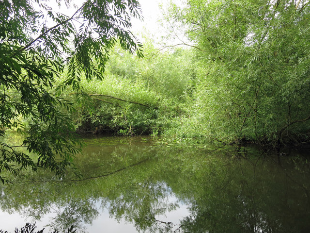 The River Colne at the western end of Stocker's Lake (2)