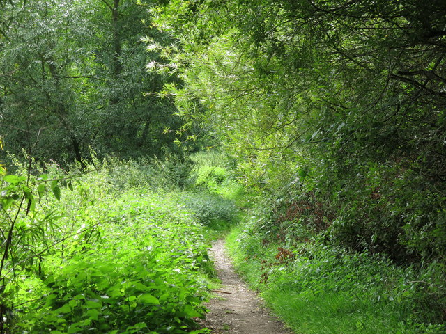 Path north of Springwell Lane