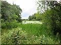NT7855 : The  northern  end  of  Hen  Poo  lake.  Duns  Castle  grounds by Martin Dawes