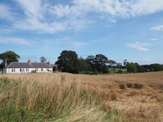 Cottages at Birnieknowes beside the Wheat Field