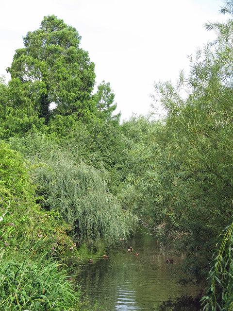 The River Colne upstream of Drayton Ford Bridge