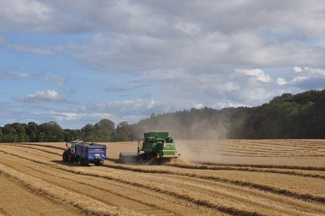 Tractor and Trailer follow John Deere Combine at Birnieknowes