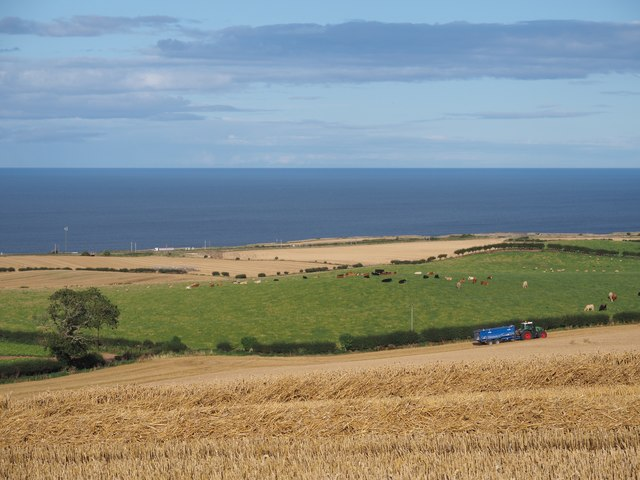 Harvest Scene at Birnieknowes