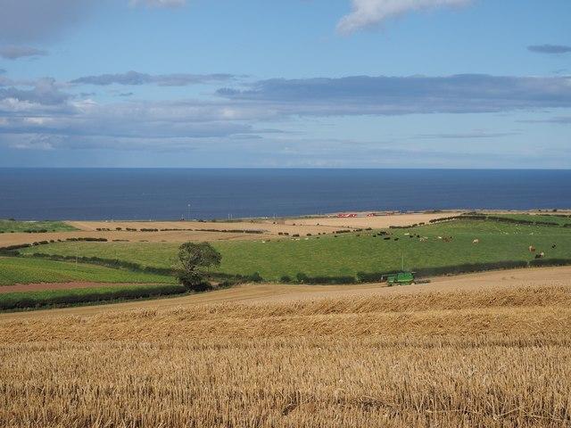 Harvest View over fields at Birnieknowes