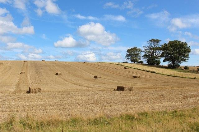 Arable field at Preston