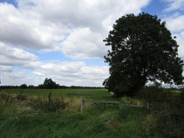 Grass field off Medlam Lane