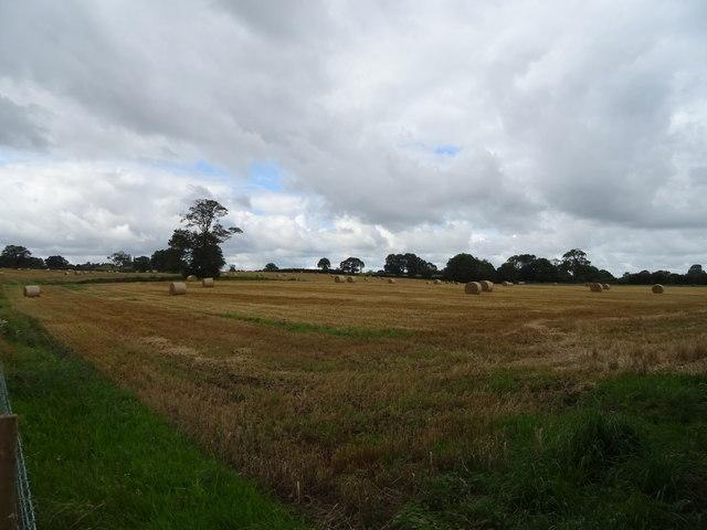 Stubble field near Shallowford House Farm