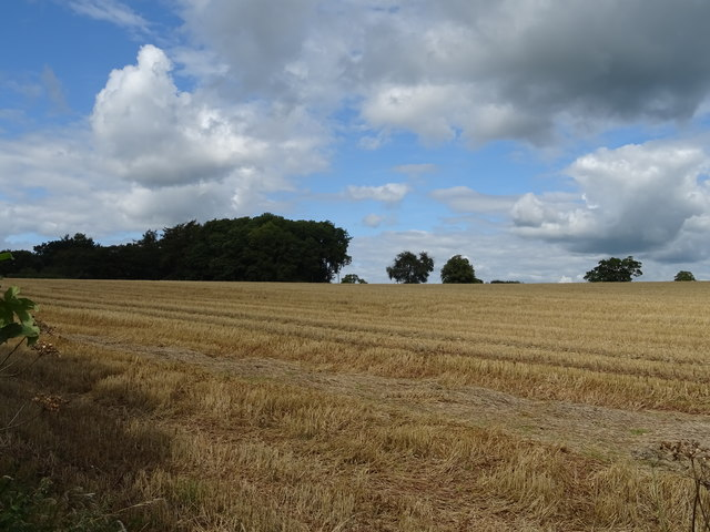 Stubble field, Wetwood