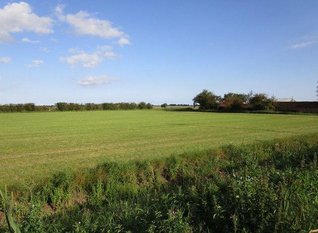 Grass field adjacent to Restholme