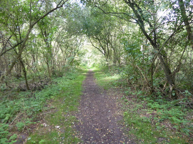 Path through Haxey Turbary Nature Reserve