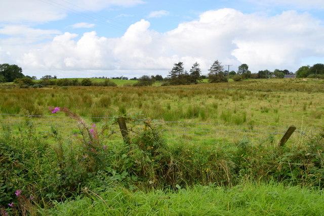 Rushy ground, Lislap East