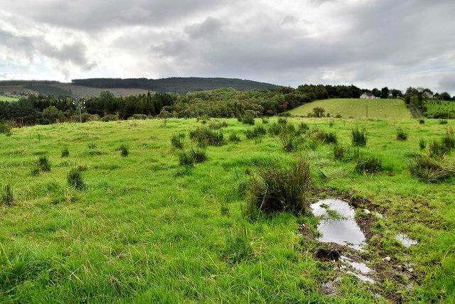 Wet ground, Lislap East