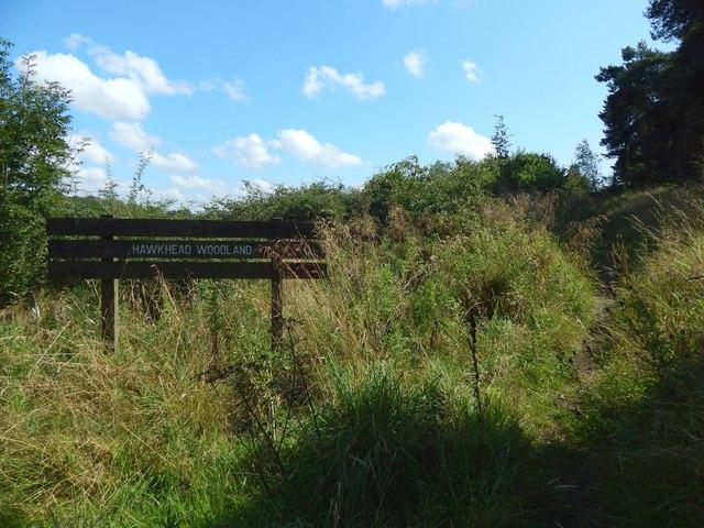 Hawkhead Woodland