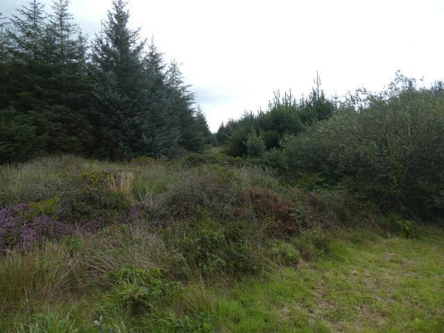 Woodland and scrub on Wilsey Down