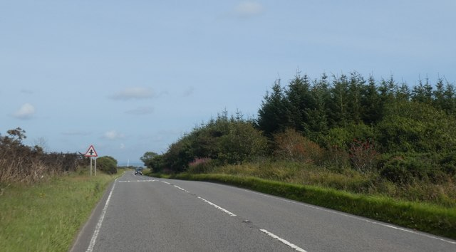 Woodland and moorland by A395 on Laneast Downs