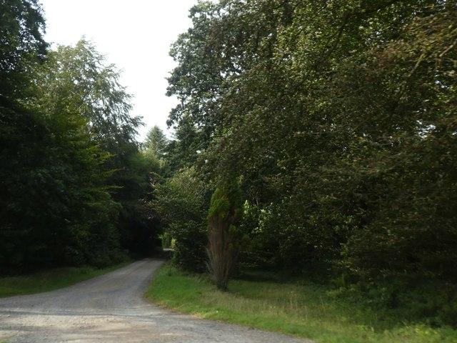 Track through Lodge Plantation