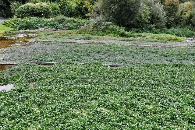 Alresford: Watercress beds next to West Lea Farm Shop