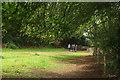 SX7978 : Into Lodge Wood by Derek Harper