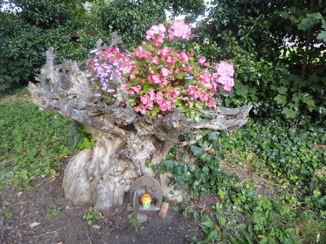 Use of an old tree stump in All Saints Churchyard