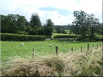 SH8931 : Sheep grazing between the railway and the B4403 by Christine Johnstone