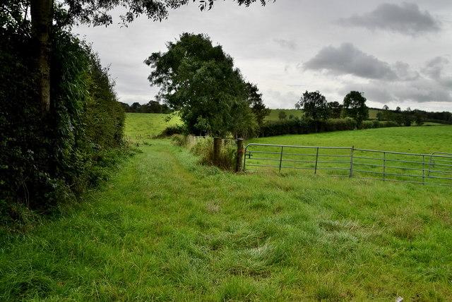 Grassy lane, Usnagh