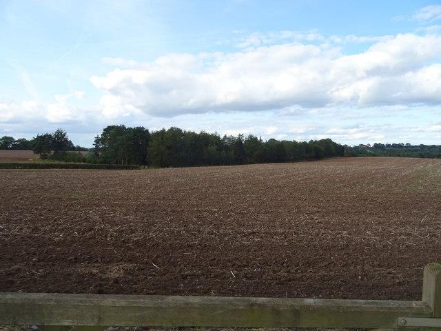 Field towards The Dingle woodland