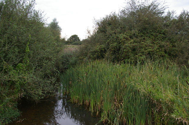 Dedham Old River, at 56 Gates sluice