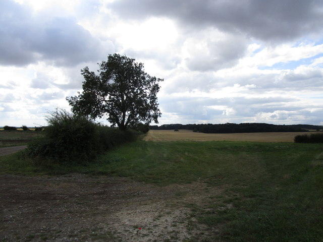 Field boundary and Exeter Wood