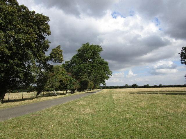 Unfenced grazing near Pickworth