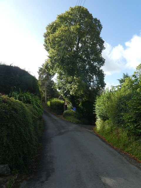 Tree at fork in the road, Wrayland, Lustleigh