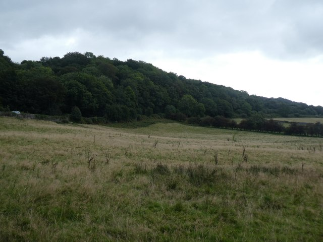 Woodland by A382, Kelly