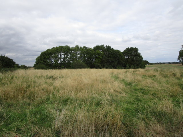 Uncultivated land and trees