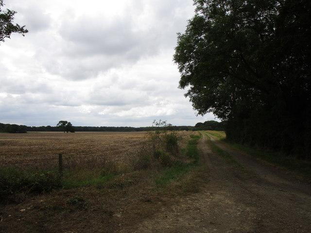 Track to Osbonall Wood