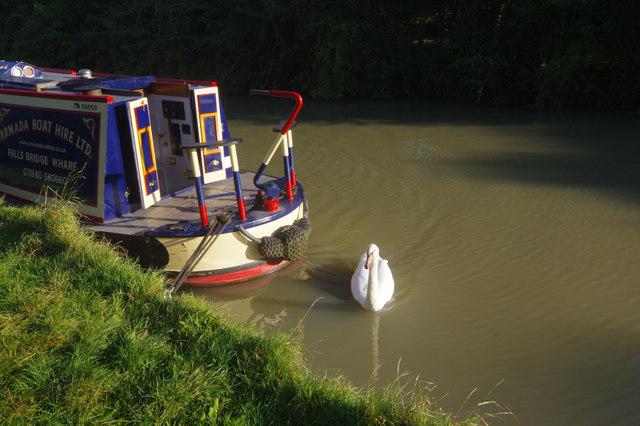 Swan at Napton