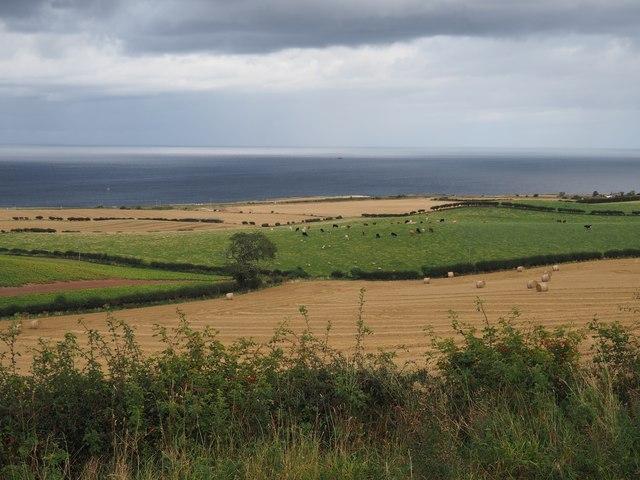 Harvest Fields at Birnieknowes