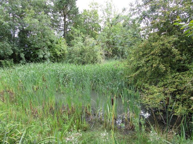 Roadside pond, Clipsham