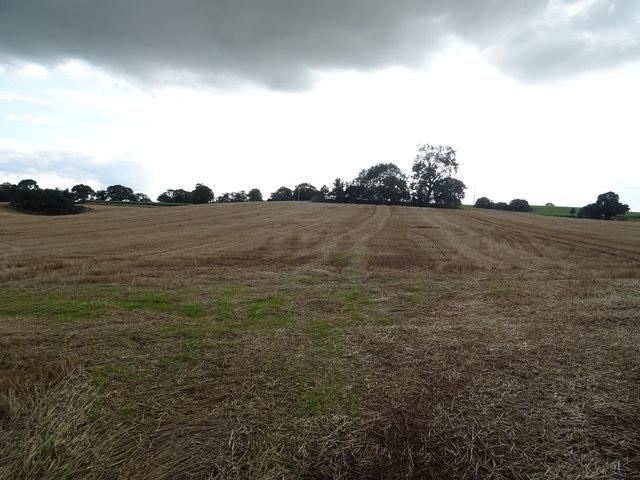 Stubble field, Walton