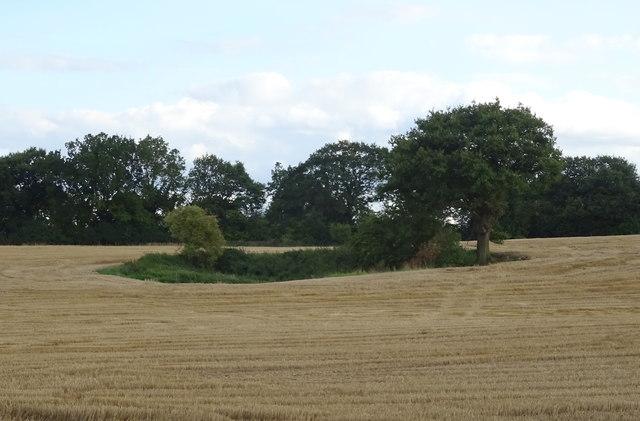 Pond in stubble field, Walton