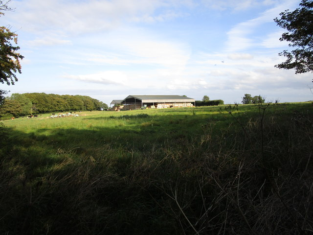 Grazing sheep and farm buildings, Stretton