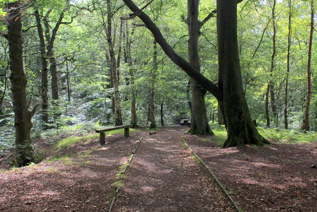 Witton Weavers Way in Big Cover Wood