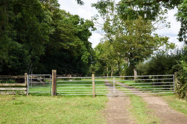 Bridleway through Grindon Lane Wood