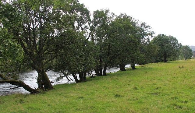 Alder trees line the River Dochart