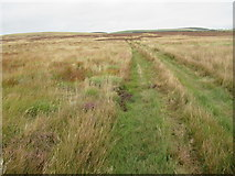 NT7153 : Track on soft ground south-west of gate on Lamb Rig near Kettleshiel in the Scottish Borders by ian shiell