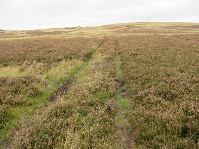 Another trackline heading for Hen Hill above Kettleshiel in the Scottish Borders