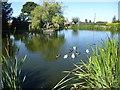 SK7499 : Ducks on the village pond at Westwoodside by Marathon