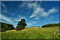 SE7366 : Hillside, near Ben Wood by Mick Garratt